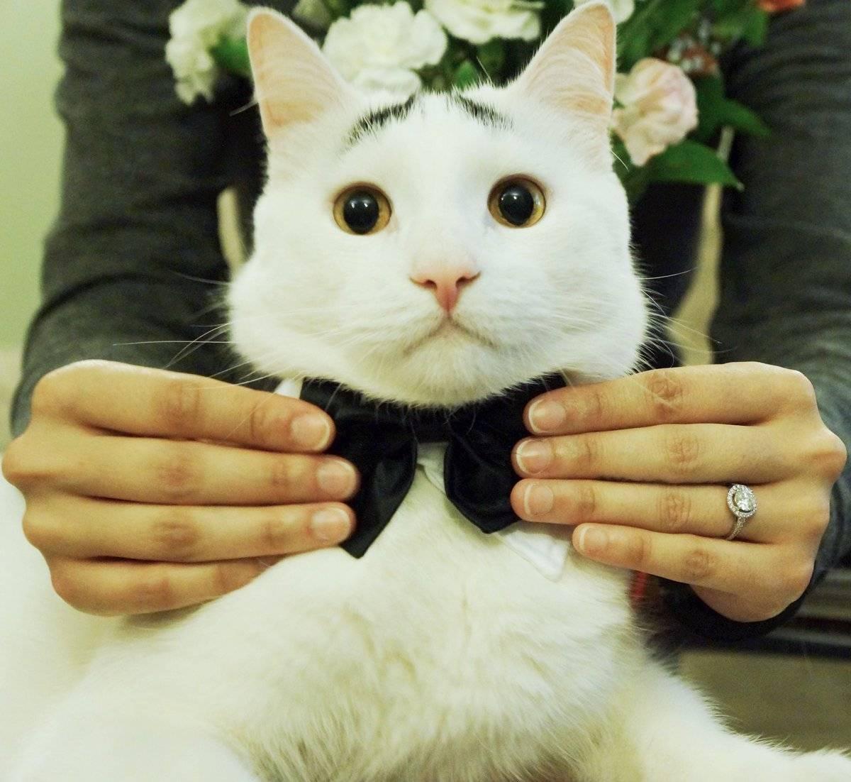 Как назвать котёнка мальчика? список имен и кличек для котов