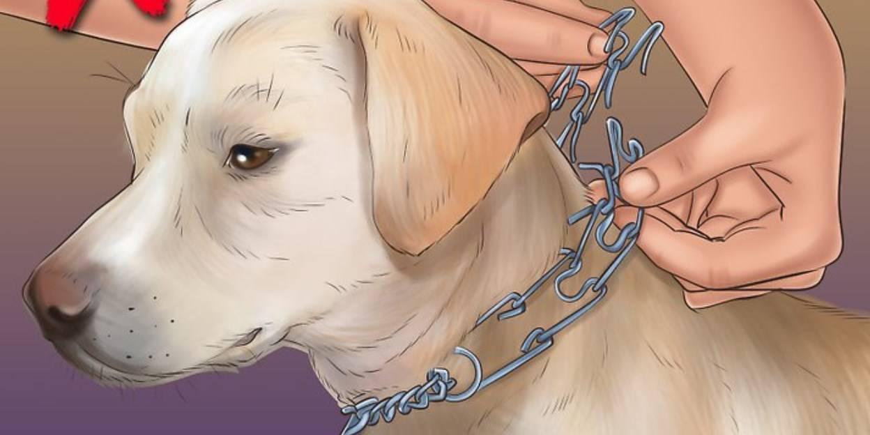 Выбираем строгий ошейник для собак