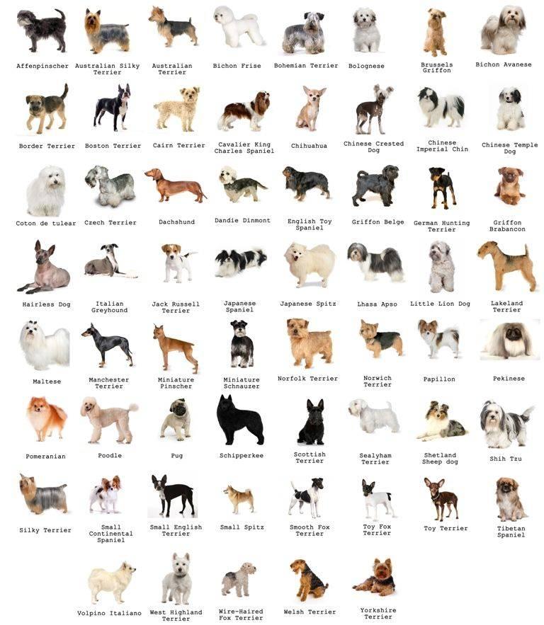 Лучшие породы собак по отзывам. топ 25
