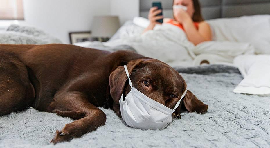 Четыре опасные болезни собак и кошек, передающиеся человеку