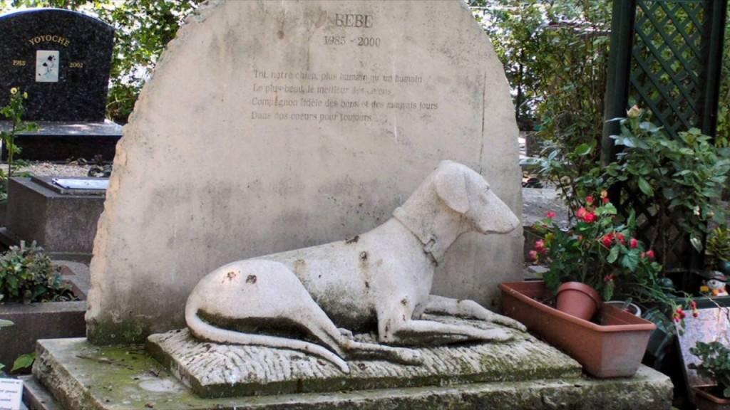 Как похоронить собаку: правила и законные места - truehunter.ru
