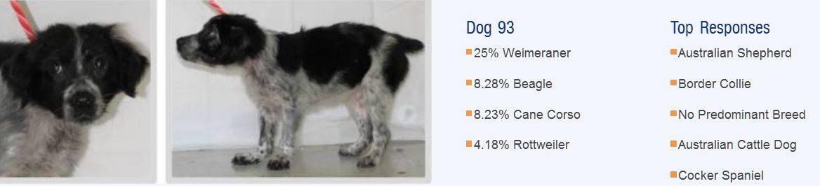 ᐉ где определить породу собаки? - zoomanji.ru
