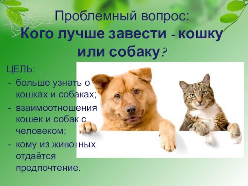 Какое животное можно завести вместо кошки и собаки