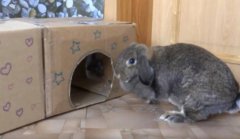 Крольчатник своими руками пошаговая инструкция с фото, чертежами и видео