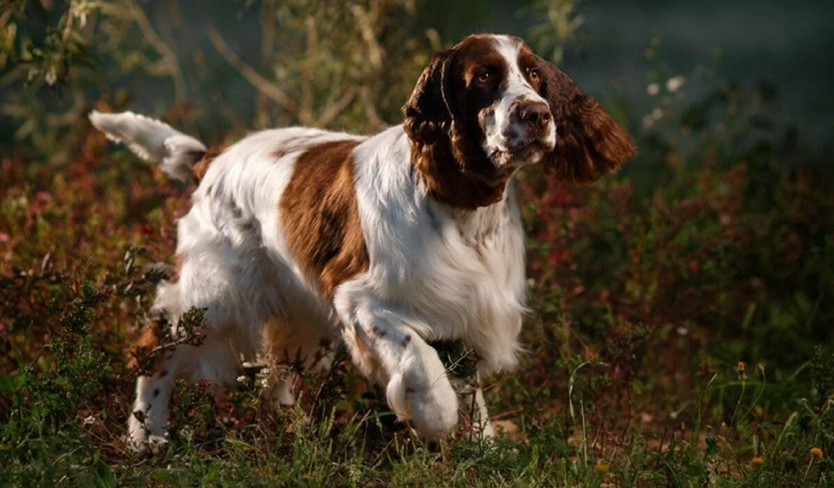10 самых преданных пород собак — настоящие друзья человека