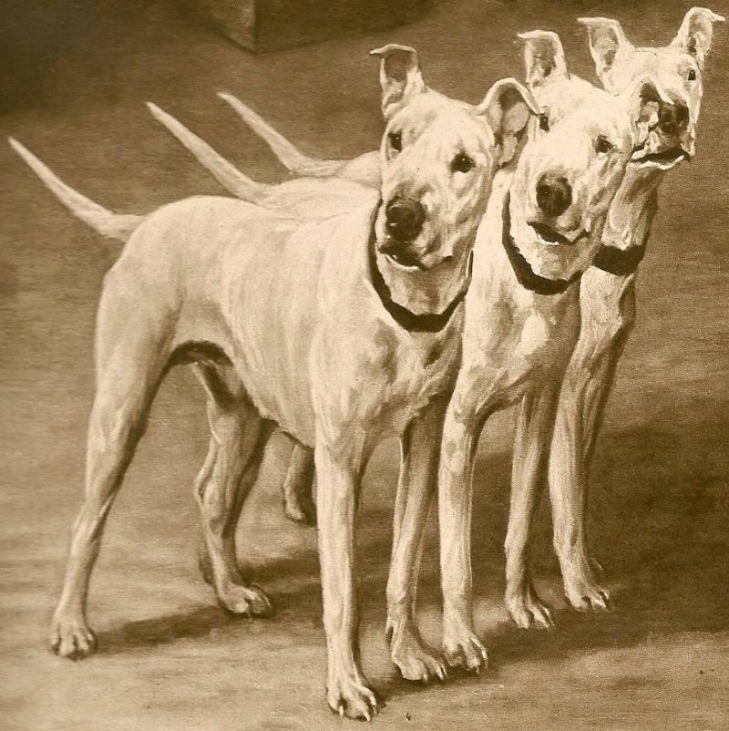 Самые редкие и исчезающие породы собак