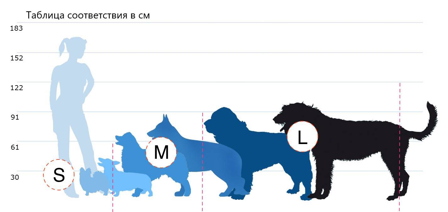 Рейтинг самых маленьких по размерам пород собак существующих во всем мире