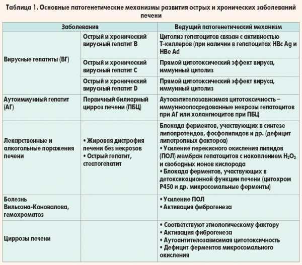 """Лечение печени у кошек - диагностика заболеваний печени у кошек в москве.  ветеринарная клиника """"зоостатус"""""""