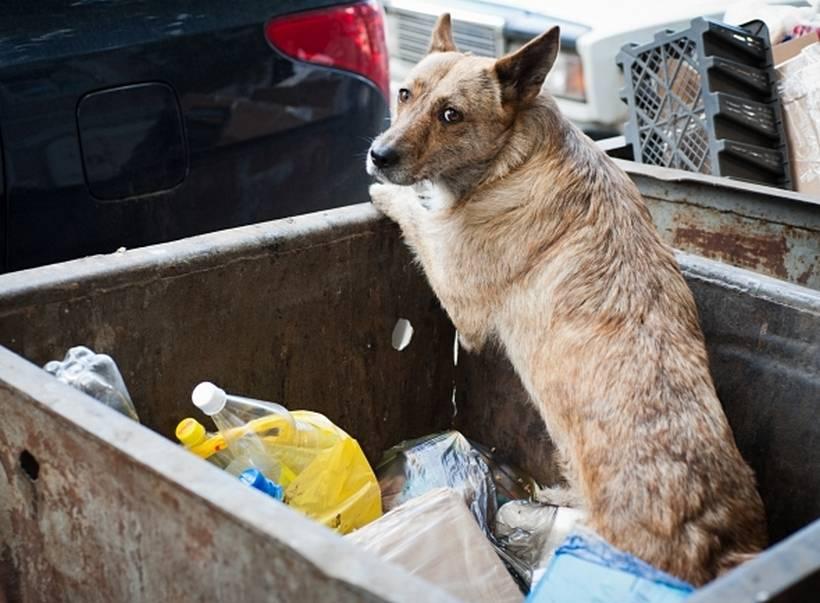 Бездомный кот, съевший кусок полиэтиленового мусорного пакета, был спасен