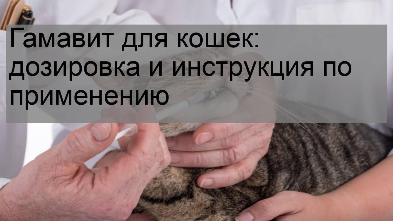Гамавит для кошек