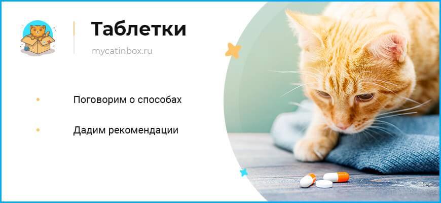 Как дать коту правильно таблетку (от глистов, витамины и прочие), если он выплевывает: лайфхаки и решения