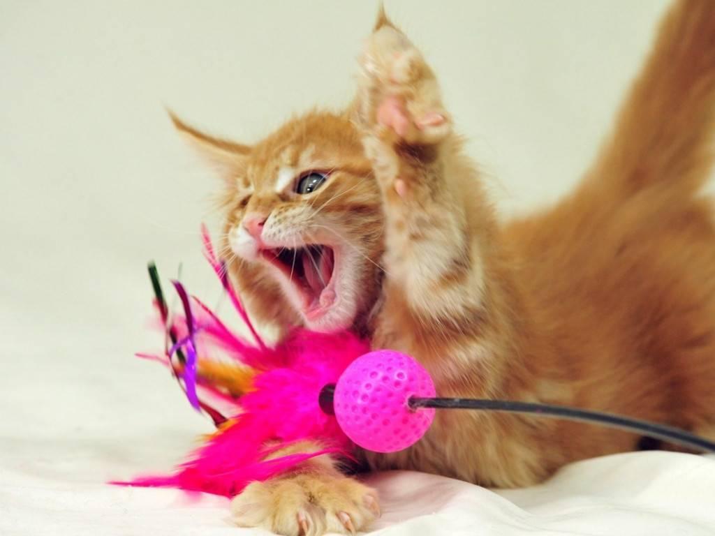 Как отучить котенка кусаться: причины такого поведения