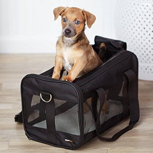 Переноски для собак: назначение и виды