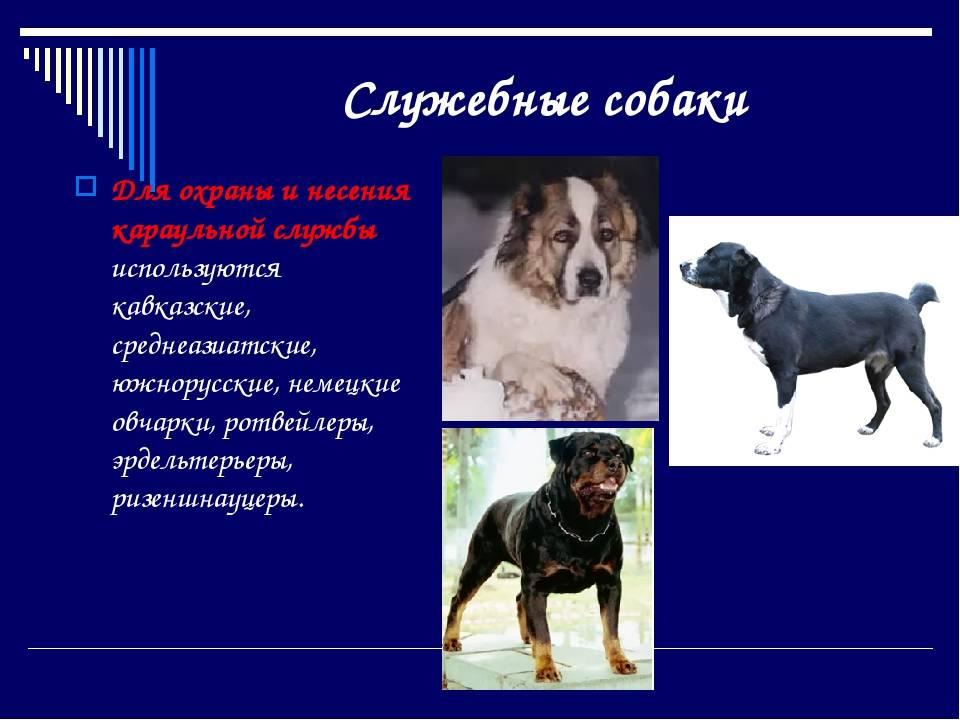 Какие бывают породы собак: общепринятая классификация