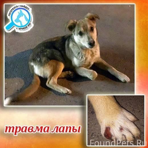 Дисплазия локтя у собак: признаки, диагностика, методы лечения