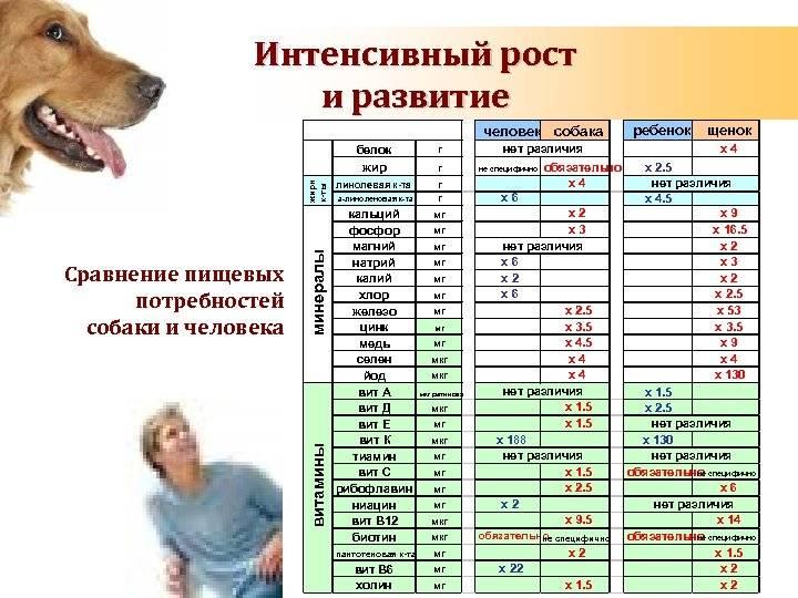 Сколько живут собаки в домашних условиях - средняя продолжительность жизни и породы долгожители