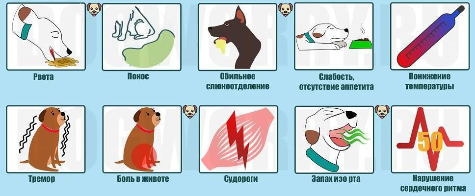 9 причин, почему кота рвет белой пеной