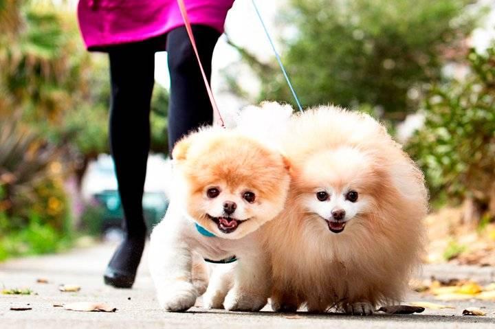 Топ 10 самых красивых пород собак в мире топ 10 самых красивых пород собак в мире