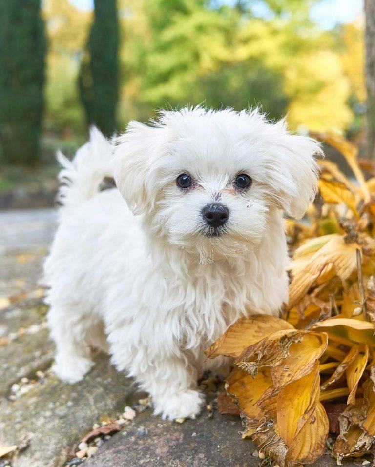 Все породы маленьких собак с названиями, фото и основными характеристиками