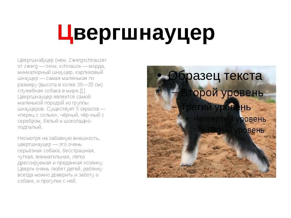 Популярные породы собак: их происхождение, внешний вид, строение и интересные факты