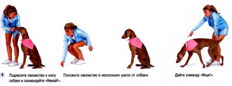 """Как научить собаку команде «фу» или """"нельзя"""" в домашних условиях"""