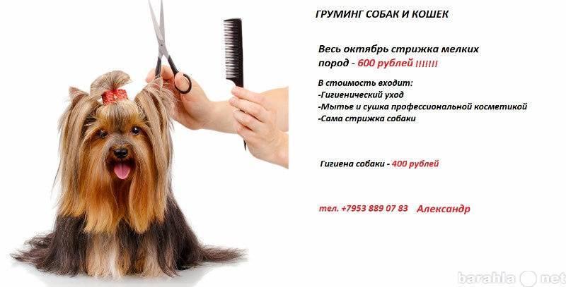 Профессии, связанные с животными. профгид.