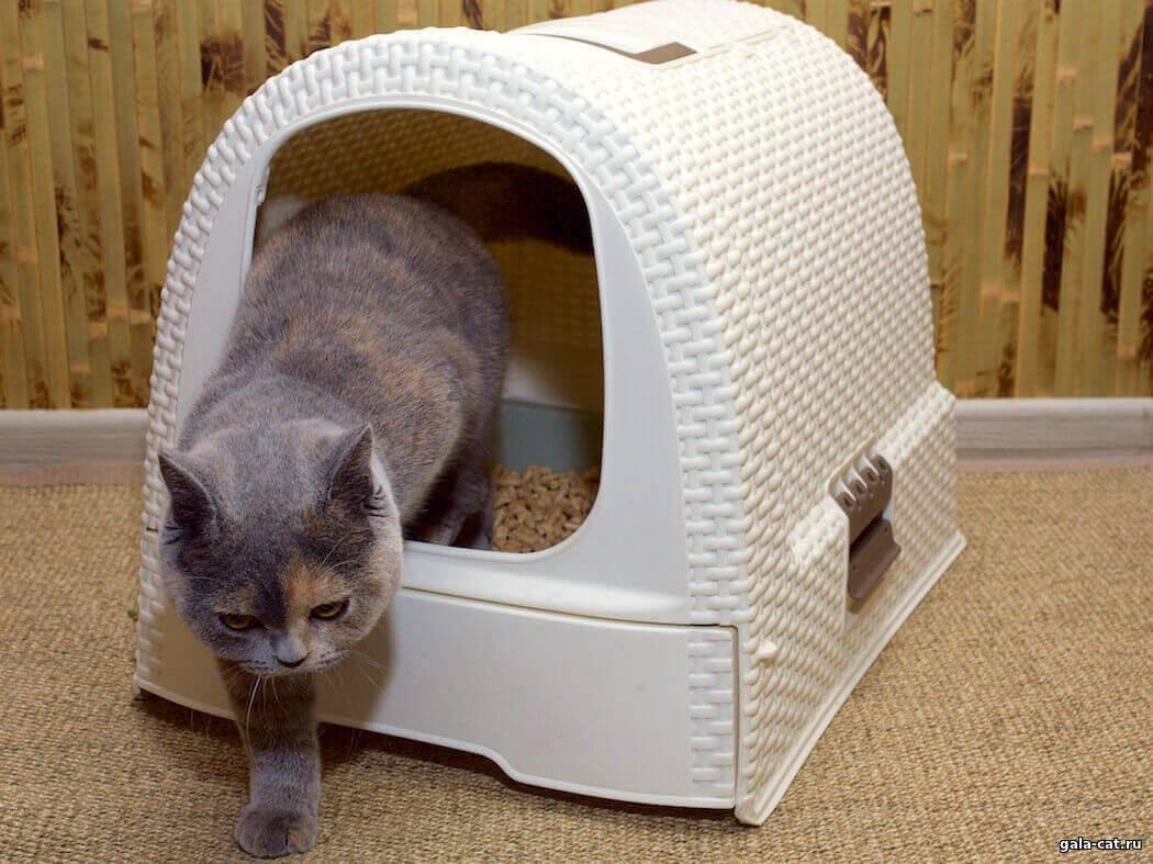 Один дома. как долго кот может продержаться в квартире без вас | общество | аиф украина