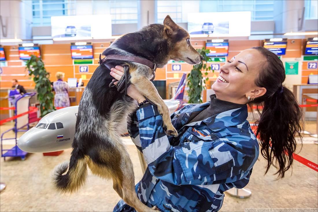 Собака сулимова: мама-анархия, папа-стакан портвейна — 4 лапки
