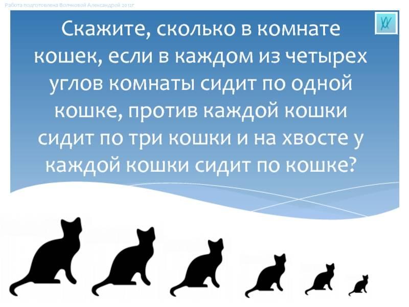 Как оставить кошку одну дома на неделю