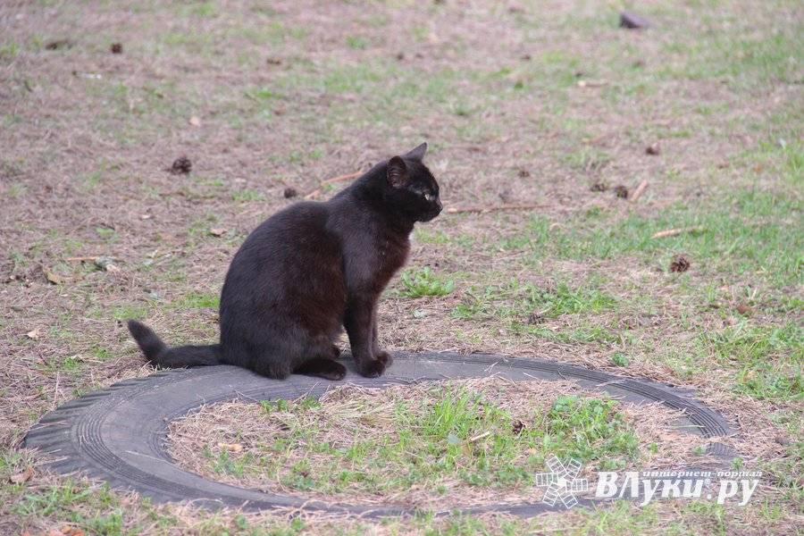 В каком возрасте кастрировать кота.
