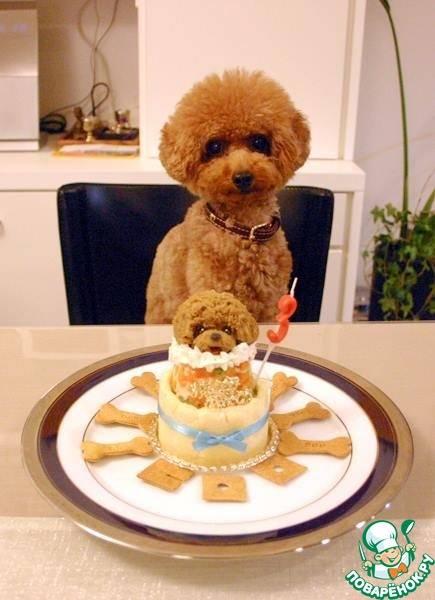 Собачий торт своими руками на день рождения собаке торт для собаки