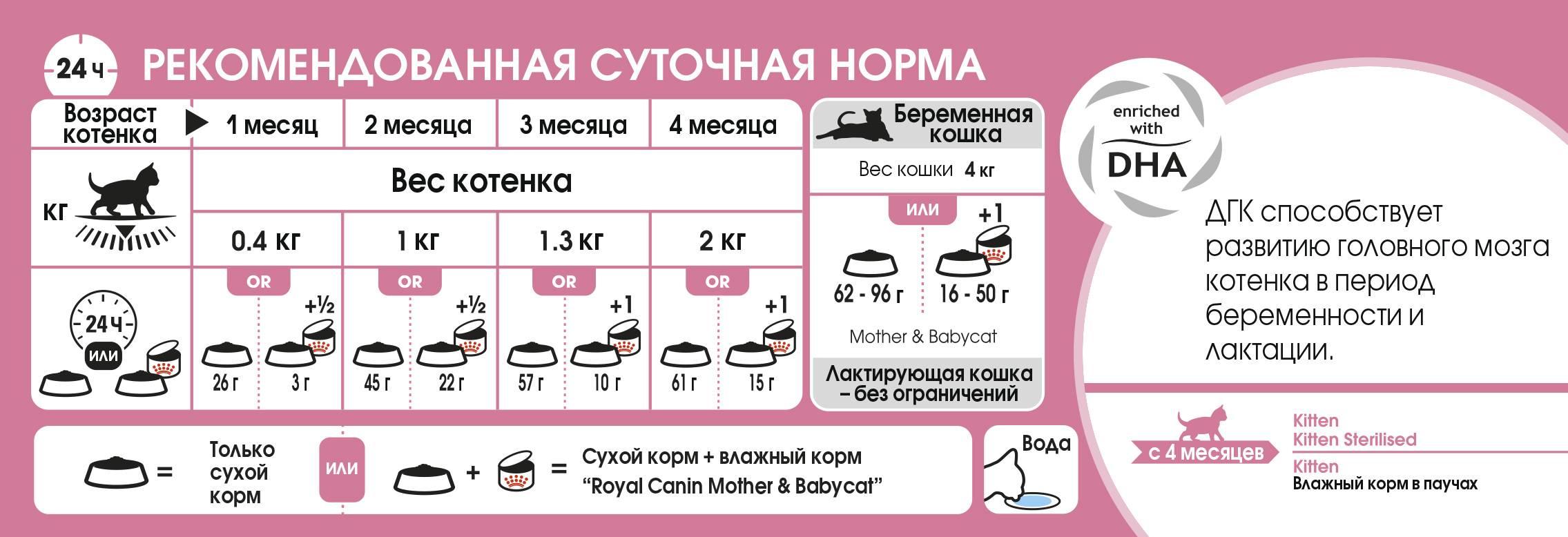 Примеры чем кормить двухмесячных котят: как часто на протяжении дня и каким кормом