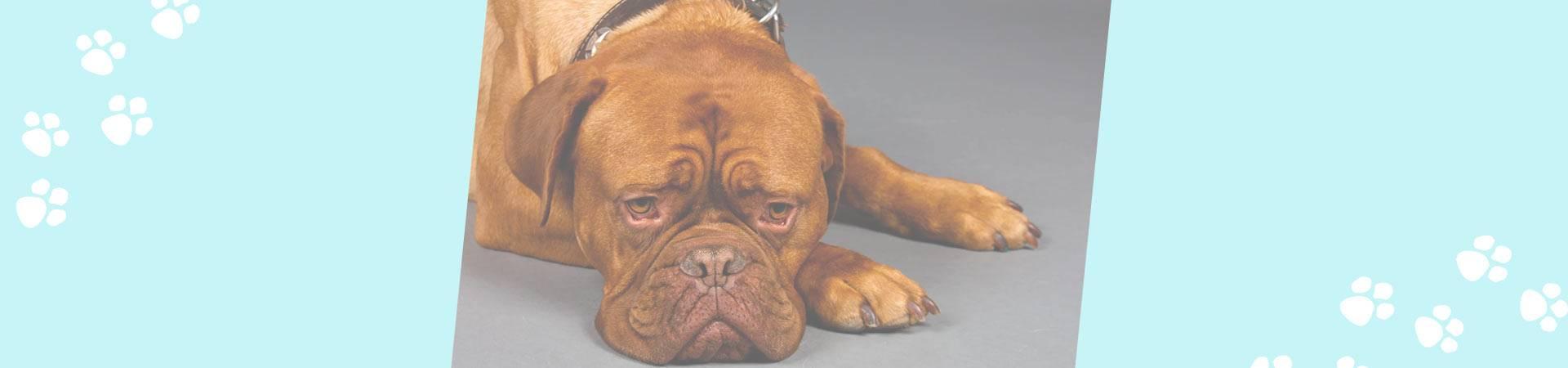 Собака не ест и не пьет — что делать?