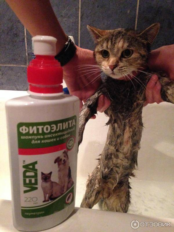 Шампуни от блох для котят, а также другие виды средств русский фермер