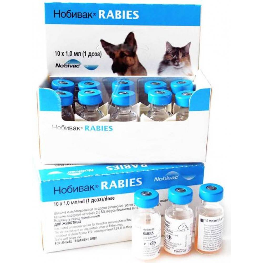 Нобивак рабиес для кошек: инструкция по применению, цена вакцины, отзывы