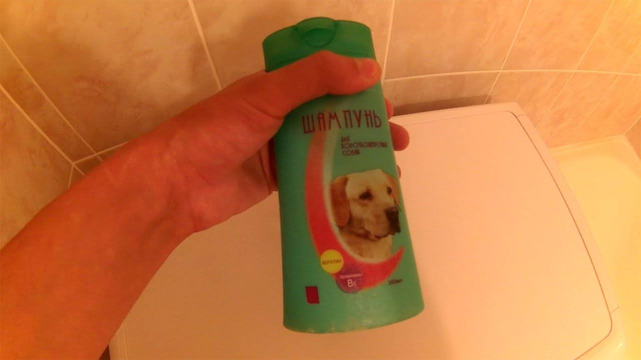 Чем можно заменить специальный шампунь при купании кошек