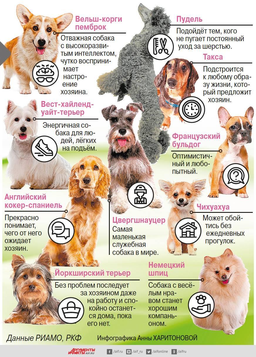 Гипоаллергенные собаки для астматиков: 19 пород собак
