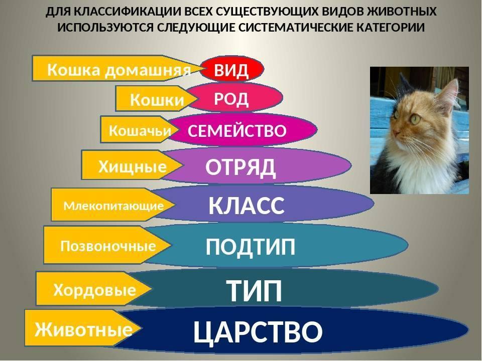 Породы кошек: 21 разновидность с названиями, описаниями, фото и видео