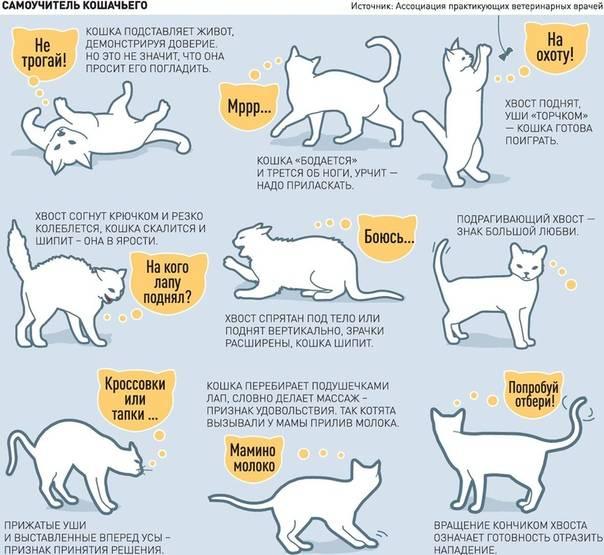 11 признаков того, что ваша кошка вас недолюбливает