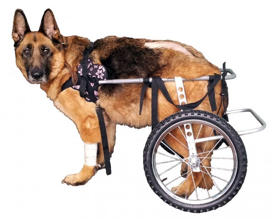 Коляски для собак (33 фото): описание прогулочных колясок для перевозки собак мелких пород