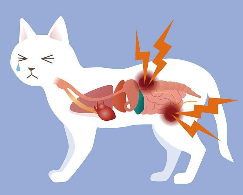 Цистит у собаки: все о неприятном заболевании