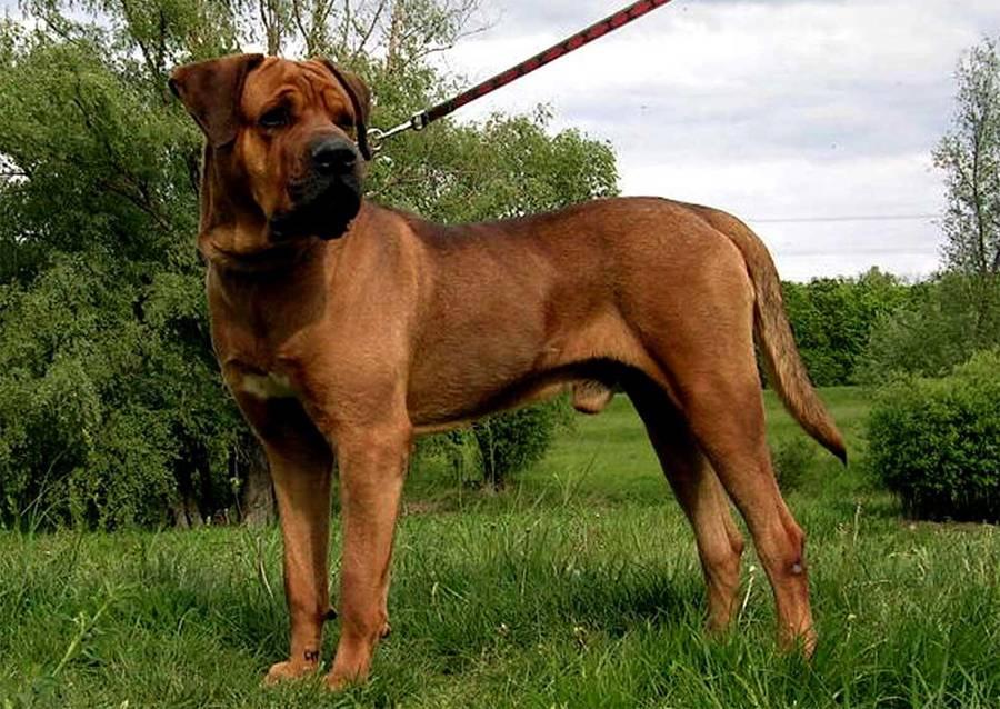 Самые добрые собаки - топ-10 с фото