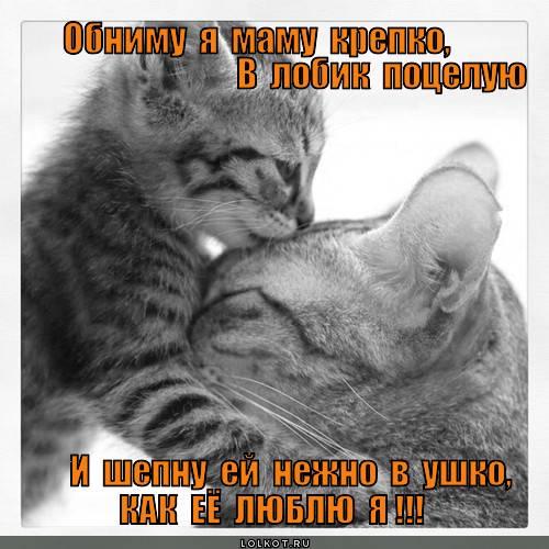 Почему нельзя целовать кошек? интересные факты и утверждения