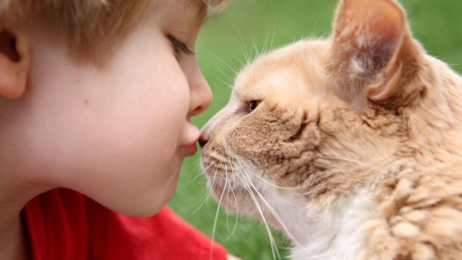 Почему нельзя обнимать котов - причины и последствия - kotiko.ru