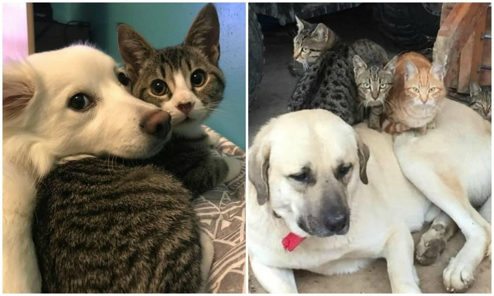 Как подружить собаку с кошкой как подружить собаку с кошкой
