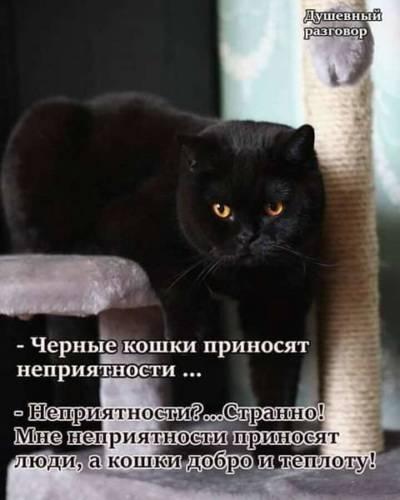 Черный кот – исчадие ада или жертва наветов: отделяем факты от вымыслов