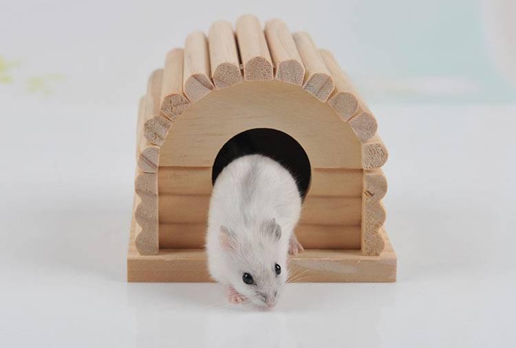 Клетка для хомяка своими руками (36 фото): как можно сделать контейнер в домашних условиях? самодельные конструкции из бутылок и дерева