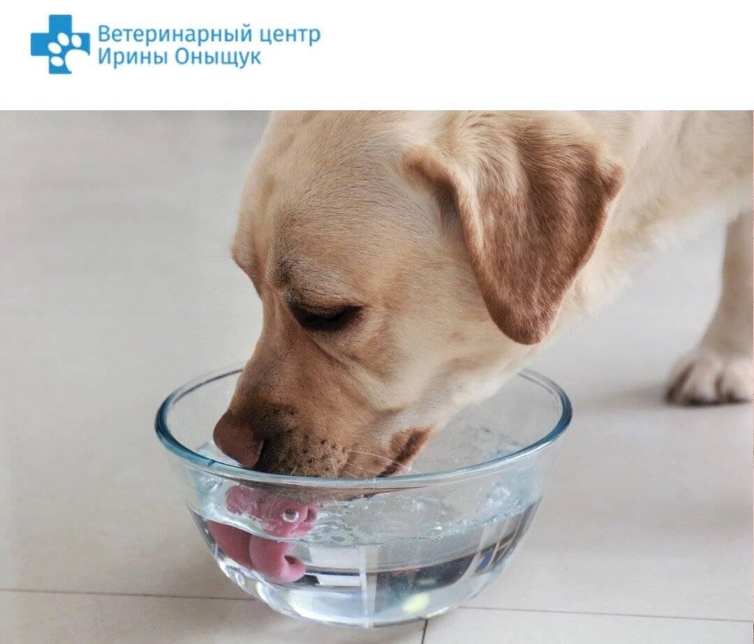 7 причин почему собака много пьет воды - возможные заболевания