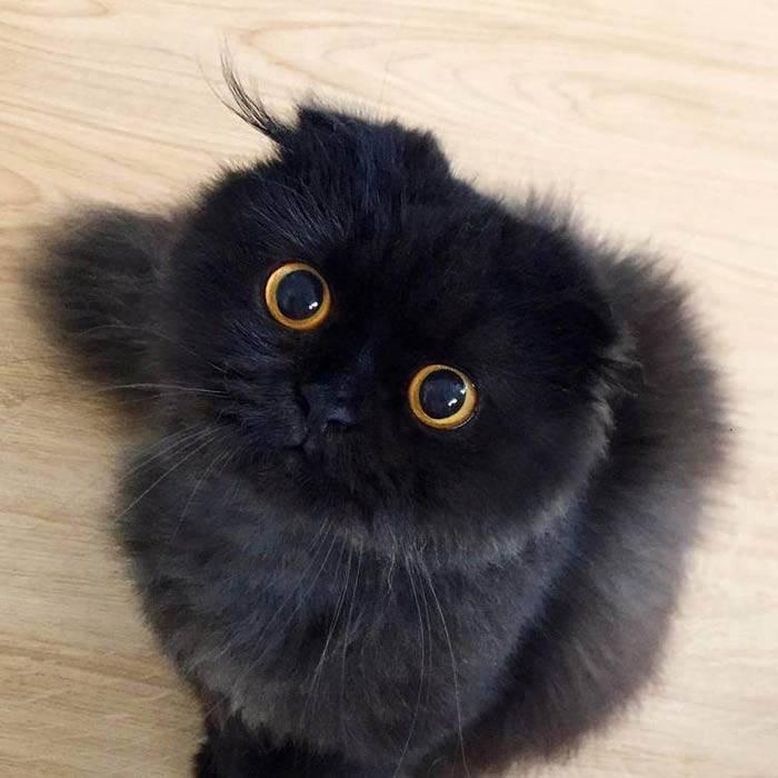 Самые милые котята (46 фото): список самых милых в мире пород кошек. как выбрать кота?