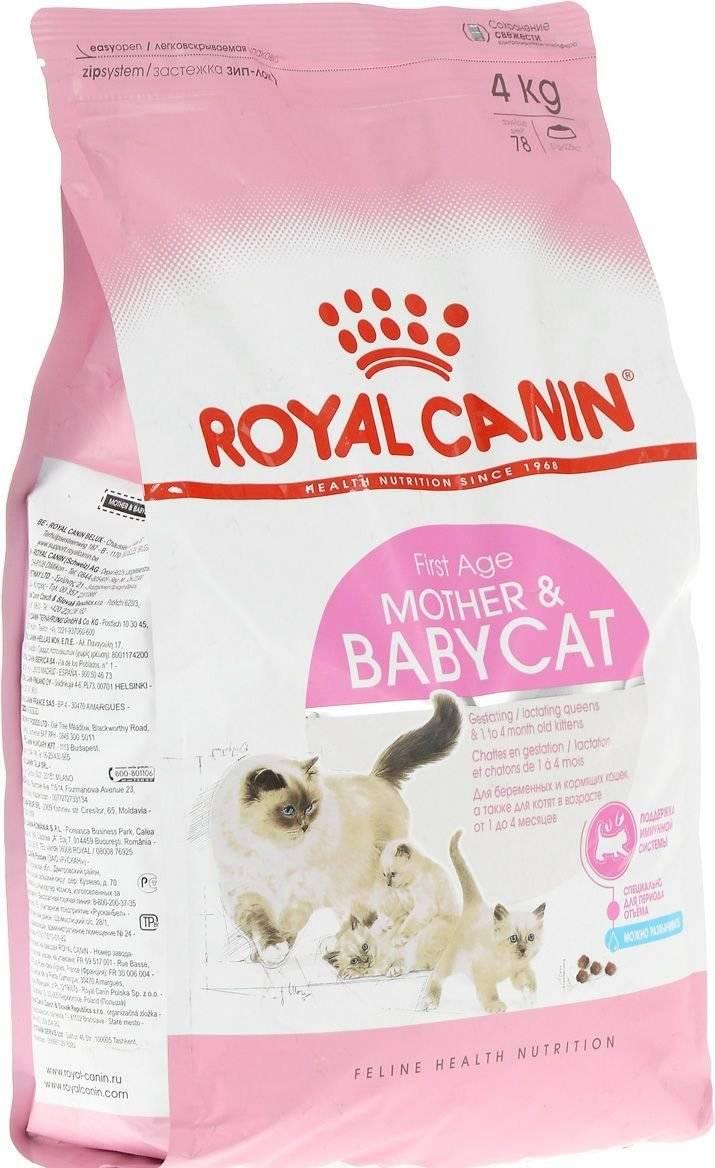 Корм royal canin (роял канин) для кошек: сухой, влажный, состав, линейка